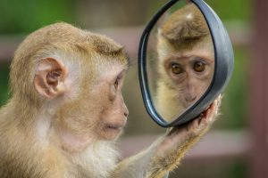 Monkey gazing deep into it's own souldful eyes. In a stolen car side-view mirror.